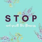 canva-light-blue-flower-illustration-floral-desktop-wallpaper-mab_n4cvzmg
